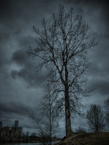 A tree by Lachine
