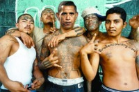 barack-obama-illegal-gang-member