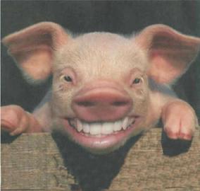smiling_pig12445-vi