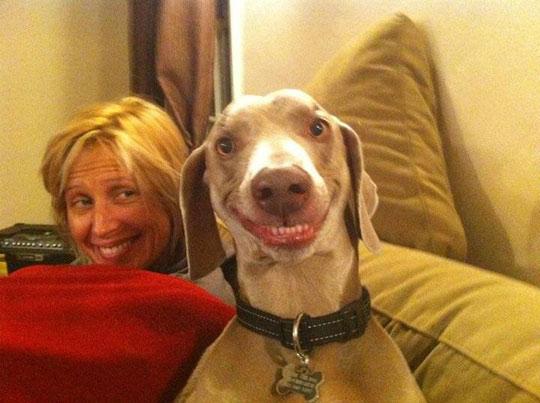 funny-dog-happy-face