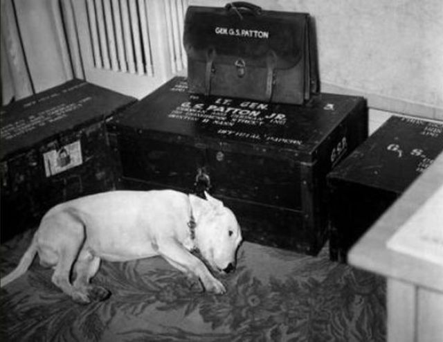 GENERAL PATTON'S DOG 'WILLIE' ON THE DAY THE GENERAL DIED. PATTON'S PHOTOGRAPHER HOME IS JUST 5 MILES FROM ME.