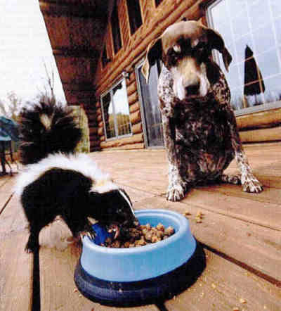 dog skunk neighbor