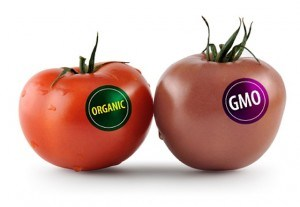 http://rasica.files.wordpress.com/2013/03/gmo_tomato-300x207.jpg?w=594