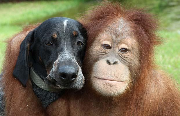 Dog Orangutan