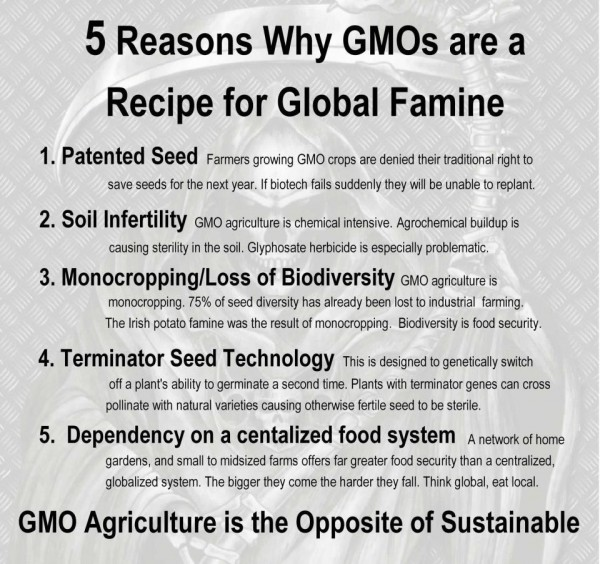 essay about gmos in europe