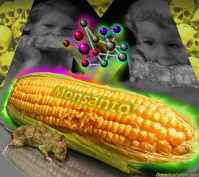 Monsanto Uses Codex To Hide GMOs In Food Chain From Innocent Consumers Monsanto-gm-corn1