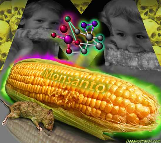 "Rothschild's Banking Cabal Monsanto Conspiracy ~ Exposed & Over: Extreme Toxicity Of Roundup Destroys ""Justification Propaganda"" For GMOs! Monsanto-gm-corn1"