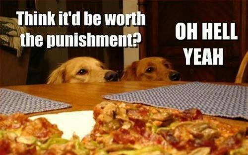 Dogs Punishment Pizza