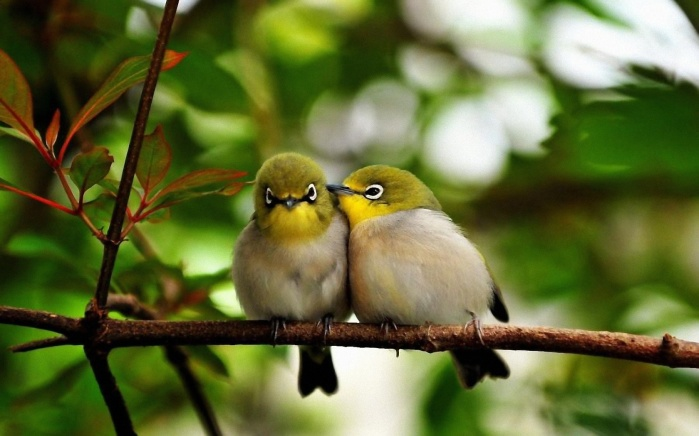 The Reset: Exorcism Of The New World Order ~ The Laudato Si. Birds-couple-cute-wallpaper