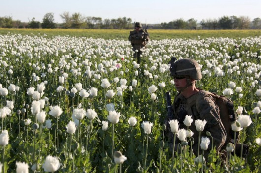 US NATO protecting Heroin Poppies.