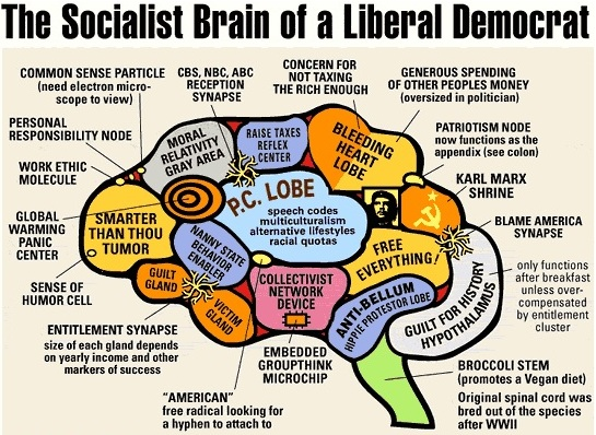 the-socialist-brain-of-a-liberal-democrat