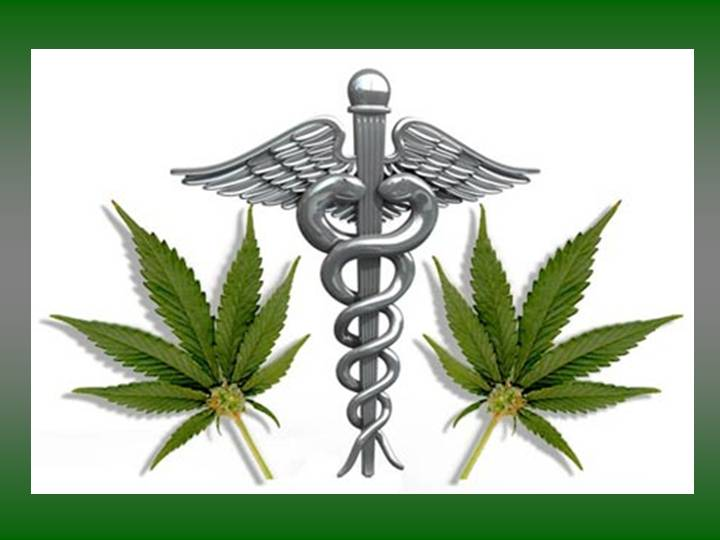Cannabis Most Medically Used Plant In The World.