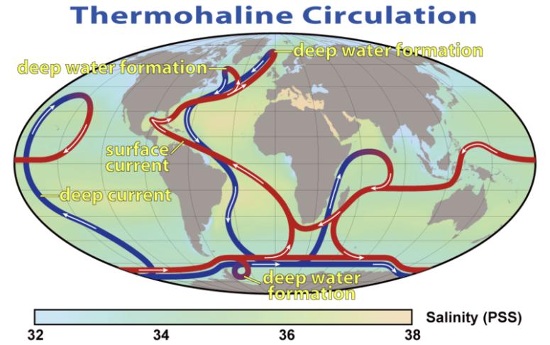 Thermohaline Circulation