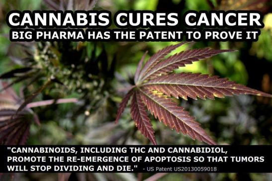 Big Pharma Frightened After New Study Shows Cannabis Is A Highly Effective Natural Antidepressant Cannabis_cures