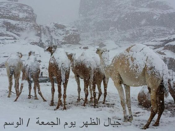 Snowing In Egypt